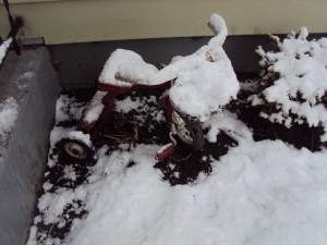 My old childhood tricycle that has seen better days is now a planter and part of the Winter Interest around my house.