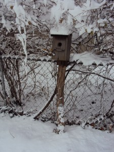 My bluebird house that does not get any bluebirds, but it's from my childhood home and I love it.