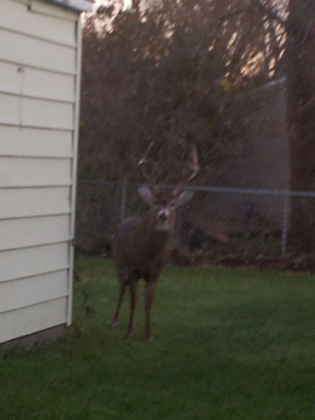 Every hunter's dream -- to have this big guy in your back yard!