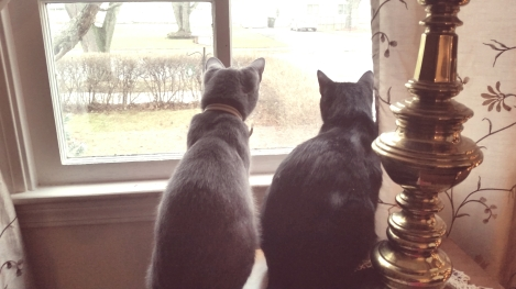These two little guys couldn't get enough of all the little birds that stopped by my feeder earlier this winter.