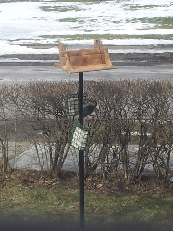 As you can see, the top of my bird feeder is off thanks to our neighborhood squirrels who finished up the last of the bird seed!