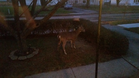 "This grainy photo is evidence that my ""deer"" friends eating out of my bird feeder."