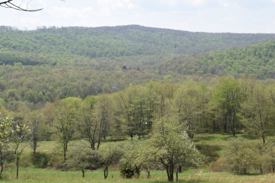 The hills at my childhood home are just speckled with green. It is beautiful!