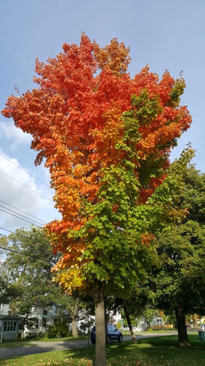 This tree is absolutely beautiful. I have never seen anything like it!